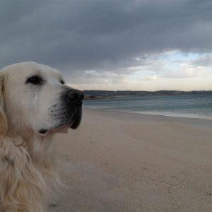 mirando-al-horizonte